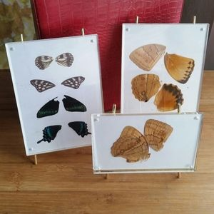 Other - Butterfly Wings in Picture frames, real